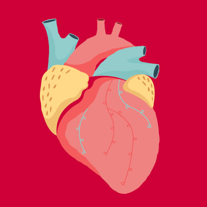 SugarDoctor Heart Illustration